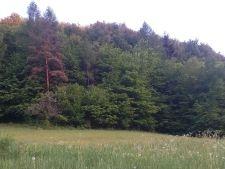 Prodej lesa, Střelná
