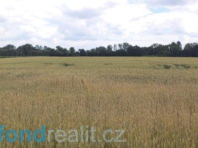 Prodej ostatních pozemků 6038 m² Roudné
