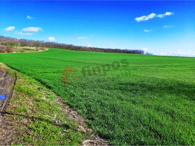 Prodej zemědělské půdy 1030000 m² Mcely